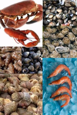 Plateau de fruits de mer sur mesure avec Paellas de José